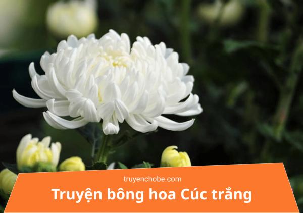 Truyện bông hoa cúc trắng