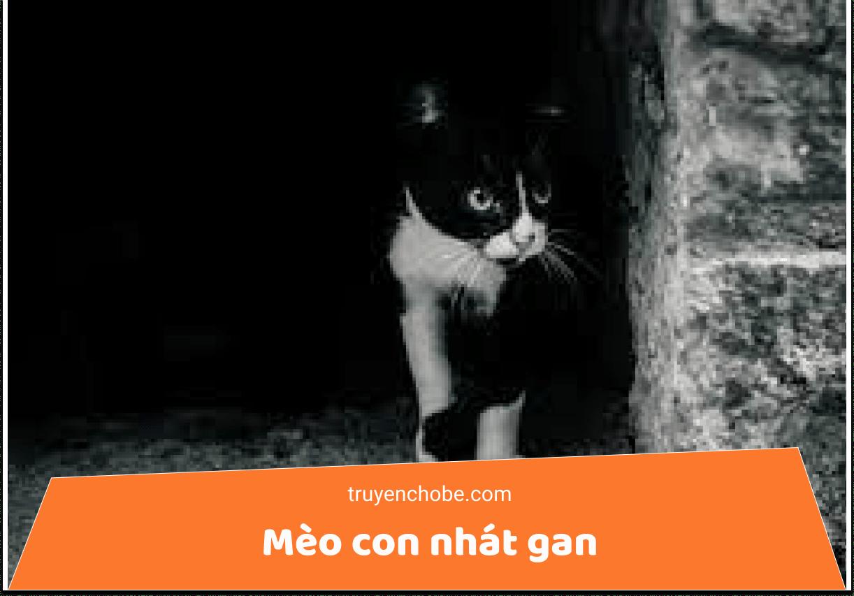Mèo con nhát gan